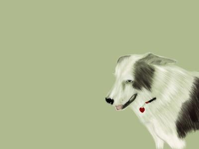 Australian Shepherd Mix minimal icon branding app illustrator typography illustration animation