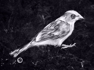 Traveling Bird v2 bird sparrow drawing illustration feathers style black and white