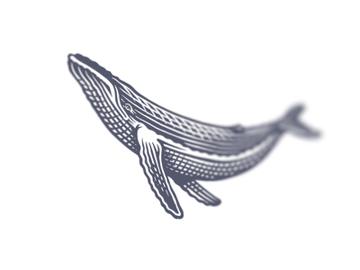 More whale engraving whale logo bw illustration