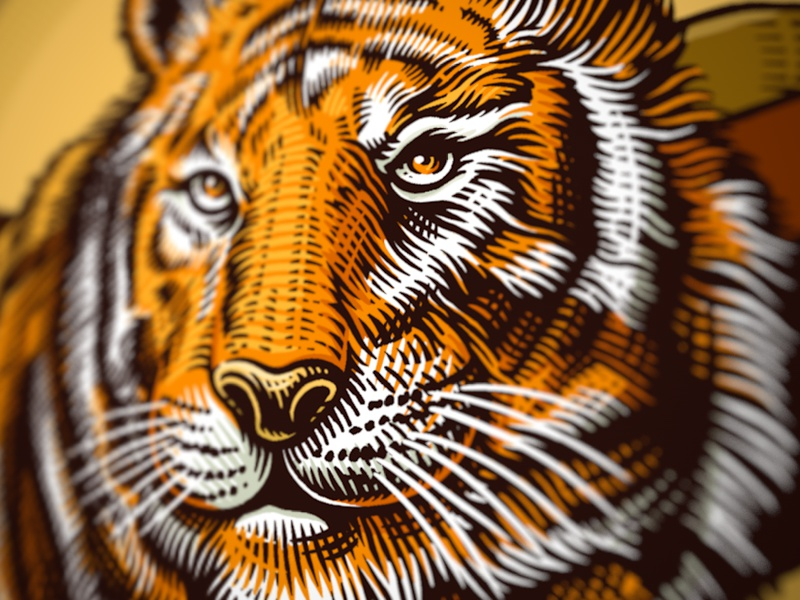 Dribbble tiger