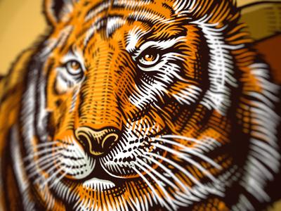 Heroic beasts (1) tiger scratchboard illustration