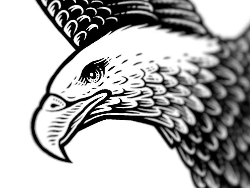 Eagle detail eagle progress illustration logo