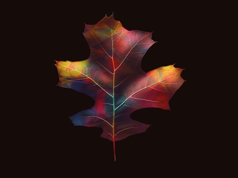 Leaf abstract organic leaves leaf nature