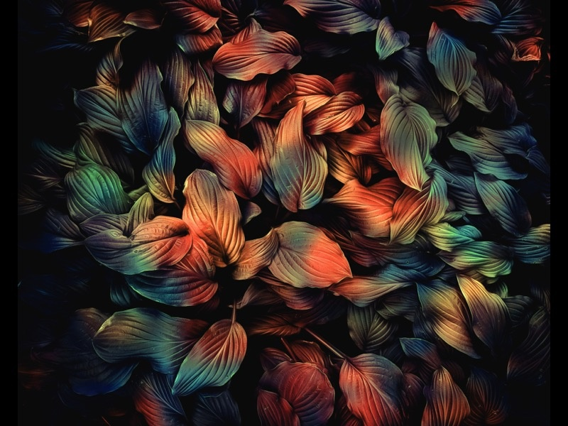 Leaves foliage nature organic leaf leaves abstract art abstract