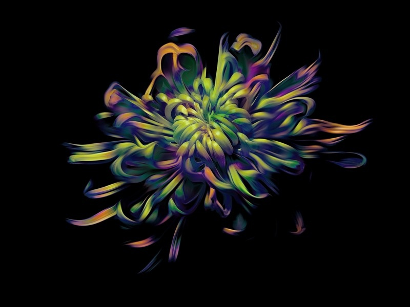 Flower petals flower nature abstract art abstract