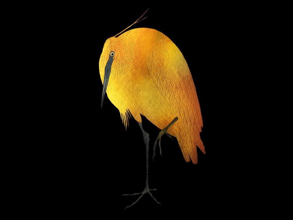Egret gold texture gold bird egret abstract art abstract