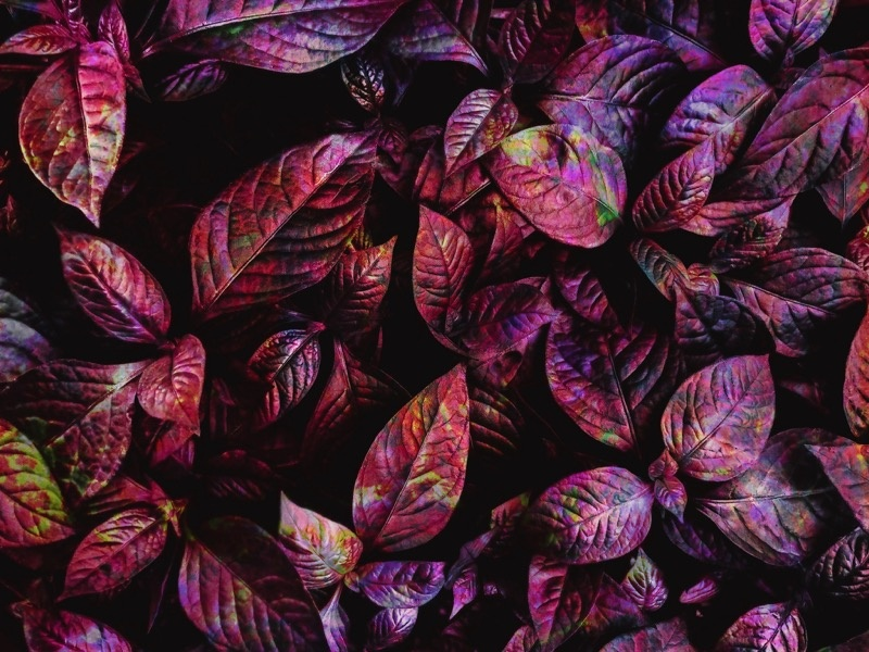 Leaves 02 organic nature leaf leaves abstract painting abstract