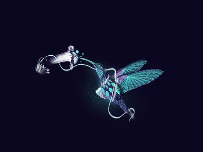 Hummingbird Glow procreate botanical flower bird hummingbird