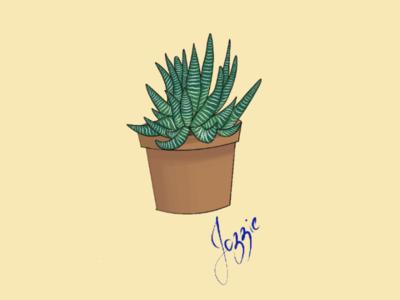Haworthia fasciata minimal wallpaper wallpaper illustration vector graphics graphics plant illustration