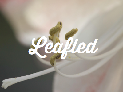 Leafled  brand light clean typeface card design