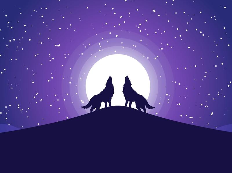 Wolf at Night design wallpaper adobe illustrator illustration