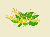 09/28 Golden Wattle