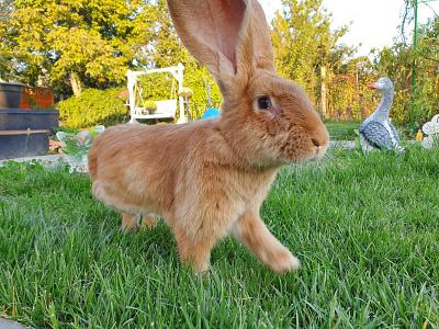 Nina rabbit