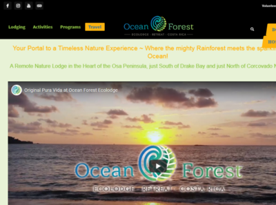 OceanForest org illustrator type website logo illustration design ux ui web branding
