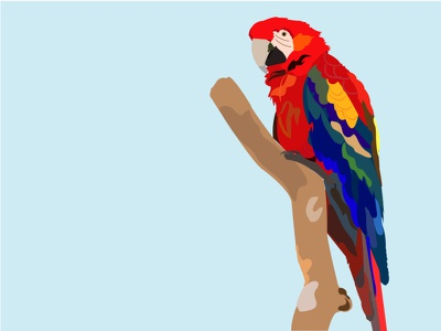 parrot illustrations illustraion illustration