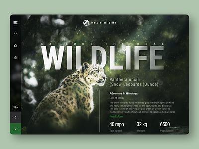 Wildlife Adventure - Blog blog post uiux wildlife website earth nature leopard snow leopard branding typography graditant design blog adventure jungle animal ux concept wildlife graphic design ui