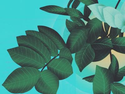 Fresh Leaves #2 digital ipad pro procreate designer motion illustration