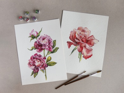 Peonies and rose watercolor nature flowers illustration watercolor botany pion rose flower flowers freehand drawing