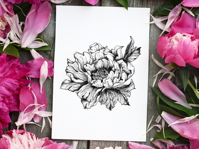 Pion. Dotwork botany flowers illustration picture tattoo freehand drawing liner gel pen dotwork nature flower