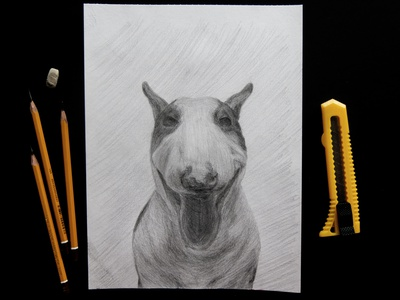 Bull terrier dog freehand drawing picture a pet animal animal art pencil