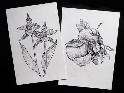 Dotwork drawings fruit old technique orange nature graphic arts illustration flowers illustration flower flowers liner gel pen paper drawings picture freehand drawing