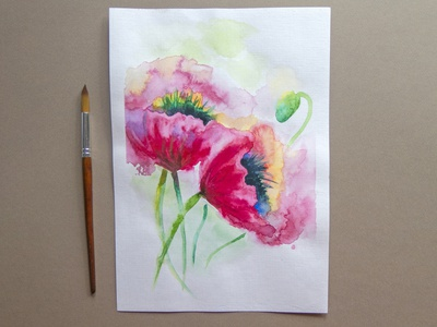 Poppies flowers botany flowers illustration flower nature picture watercolor flowers poppy poppies freehand drawing illustration