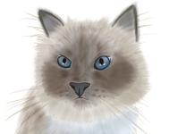 My cat childrenillusration procreate digitalart cat