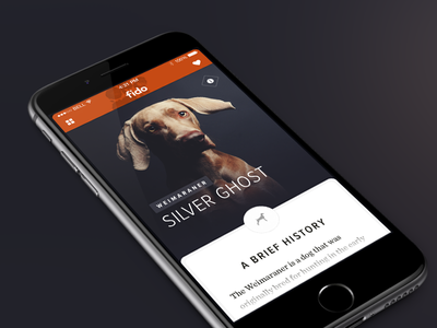 Fido - Mobile dog search research ios8 iphone6 history clean minimal layout editorial