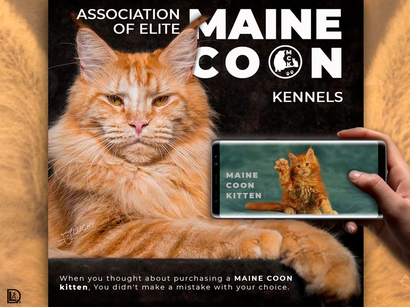 Maine Coon Kennel social media instagram post collage instagram stories landing page social media design social media banner web design