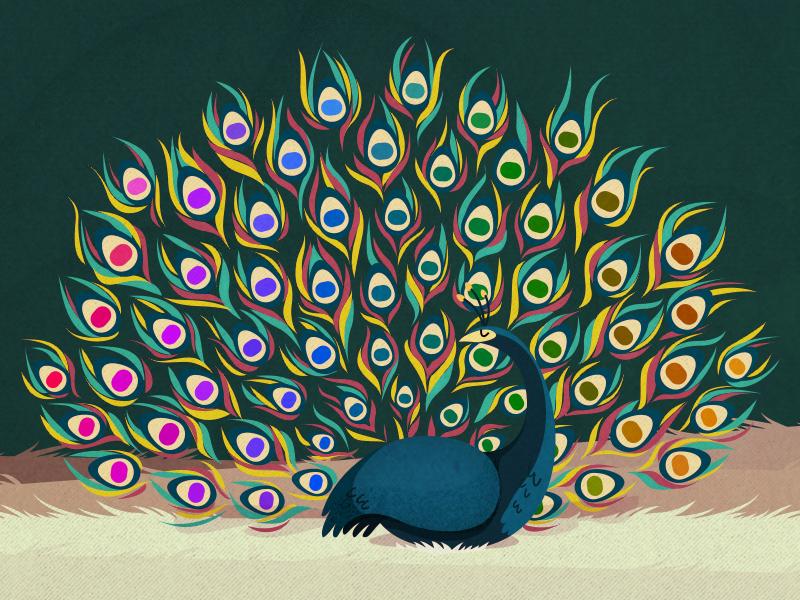 Peacock Palette rainbow color peacock palette cmyk illustration