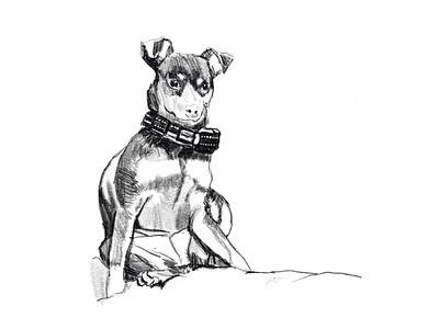 Penny design graphics graphic design illustration digital art pet portrait dog portrait dogs dog drawing sketch