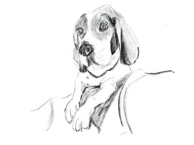 Otis design pet portrait dog portrait dogs dog graphicdesign digitalart graphics illustration graphic design