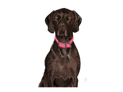 Dog Portrait design digital art graphic design graphics drawing sketch personalized sketch pet illustration dog illustration pet dogs dog