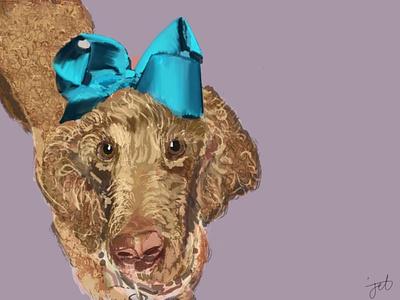 Willow pet portrait design digital art illustration drawing graphic design graphics standard poodle poodles dogs dog