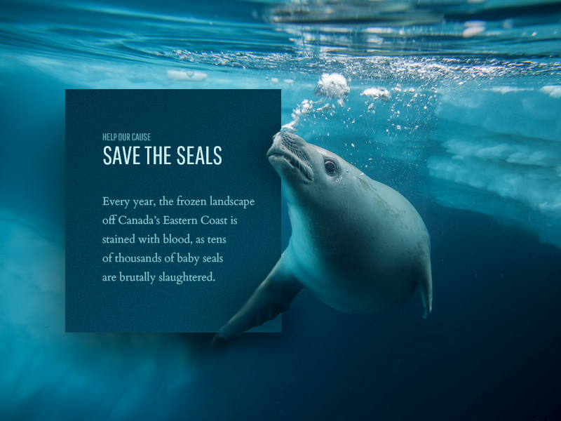 Save the Seals material cause layout card donate donation sea seals cta call to action