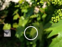 Camera App Concept