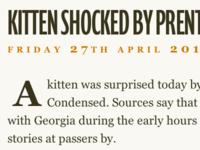Kitten Shocked By Prenton