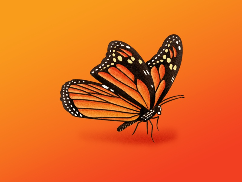 Monarch Butterfly Texture (WIP) texture butterfly monarch illustration