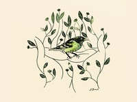 Shade Grown bird illustration grown shade plant coffee bird