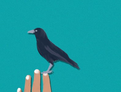 crow drawing paint painting cover art art work artwork creative vector photoshop illustrator illustration design animation