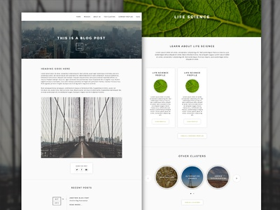 Blog and Case Study Pages web template blog ui website