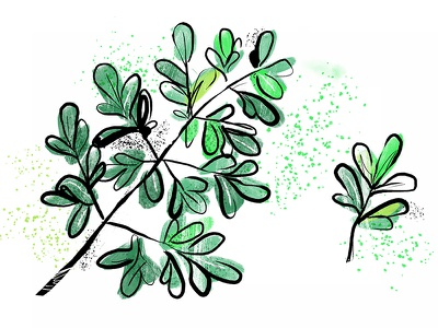 Common Rue nature luck painting ink greenery green leaf vegetable plant rue common