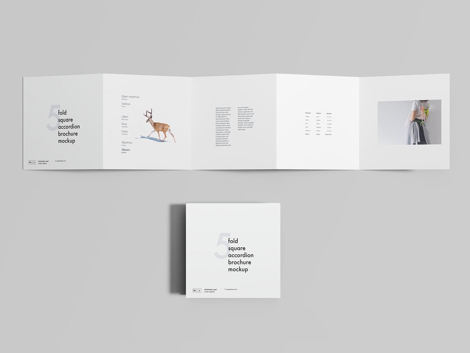 free 5 fold accordion brochure mockup by wassim dribbble