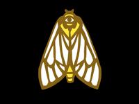 Ghost Moth Pin Sketch