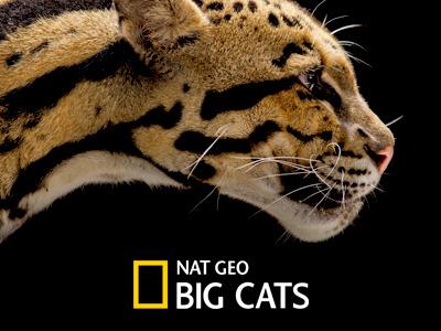 National Geographic Big Cats - Windows App natgeo application app geographic national windows big cats microsoft