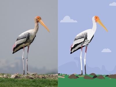 Painted Stork - Photograph vs Illustration
