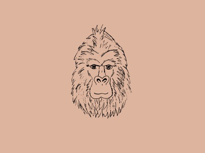 Gorilla eyes primates primate wildlife wild nature conservation nature illustration illustration gorila gorillas gorilla