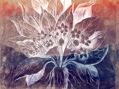Mandrake flower texture photoshop drawing root mandrake