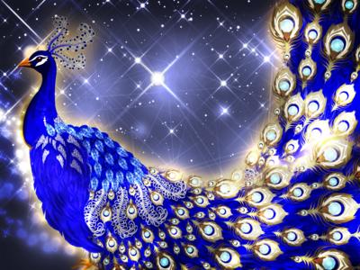 Jewelled Peacock