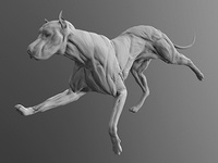 Rough Muscle Study